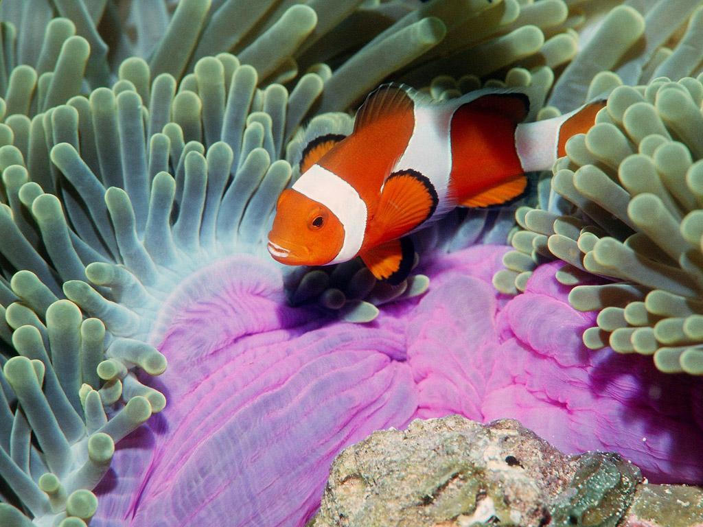 Animali che vivono in acqua | animalinelmondo