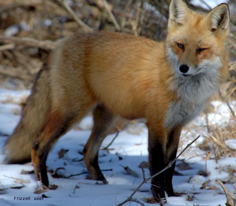 10 animali in via di estinzione animalinelmondo for Mail il tuo account e stato hackerato