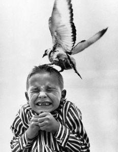 Seagull Attacking Child's Head