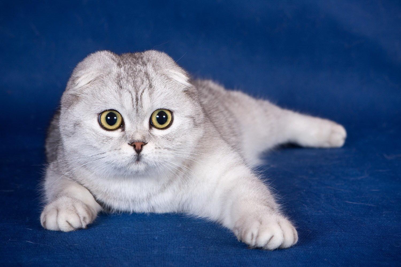 Милые котята скачать картинки