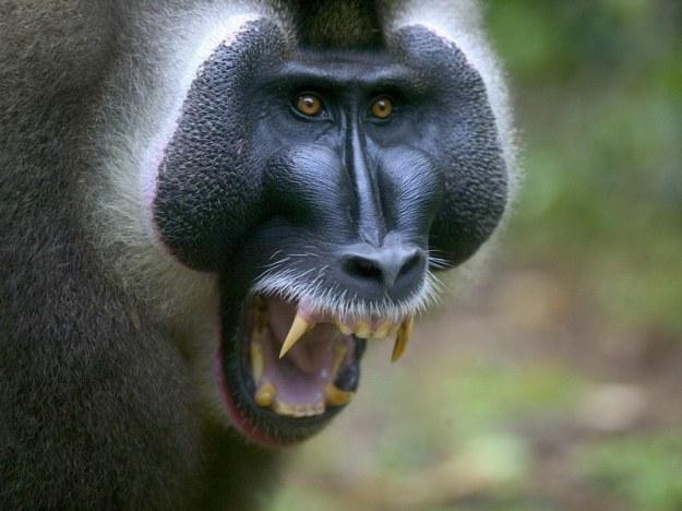 monkeys-14