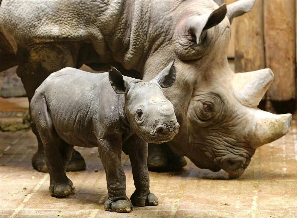 Animali in foto curiose animalinelmondo - Immagini di animali dello zoo per bambini ...